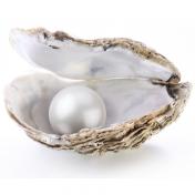 Puudre de perle