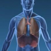 poumon en médecine chinoise