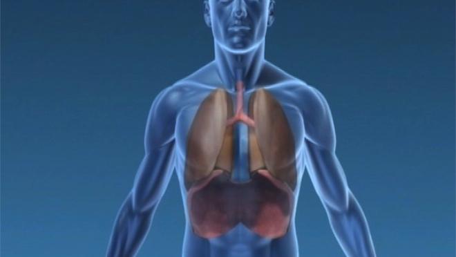 Le poumon en médecine traditionnelle chinoise