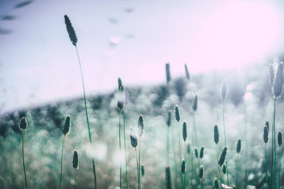 Rhinite, asthme allergique : protégez-vous contre les allergies de l'automne !